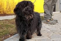 Zraněného voříška našla v Krnově za plotem své zahrady v pátek 29. března obyvatelka ulice Švabinského.