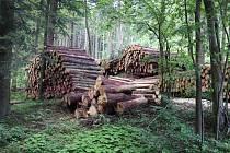 Kůrovcové dřevo mezi Rejvízem a Dolním Údolím.