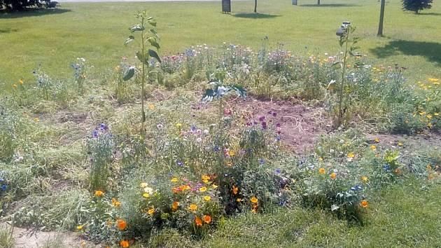 Experimentální záhon slibuje atraktivní proměny kvetoucích letniček od června až do října.