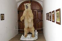 Lední medvěd za živa lákal návštěvníky do ostravské ZOO a po smrti udivuje svou velikostí návštěvníky linhartovského zámku. Vycpaného třímetrového medvěda i další lovecké trofeje a vycpaná exotická zvířata zapůjčil Jiří Čížek z Holčovic.