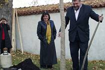 V Tachově bude předání titulu Město stromů Krnovu připomínat liliovník tulipánokvětý, který zde vysadila starostka Krnova Renata Ramazanová a ředitel Nadace Partnerství Miroslav Kundrata.