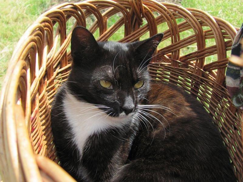Život kočky domácí, která se zapsala v srdcích majitelů ze Slezských Rudoltic, ukončil neznámý střelec.