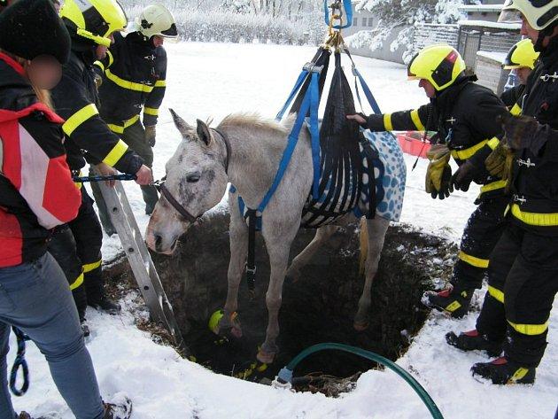 Kůň spadl do čtyři metry hluboké studny. Hasiči použili k vytažení speciální síť a vyprošťovací techniku.