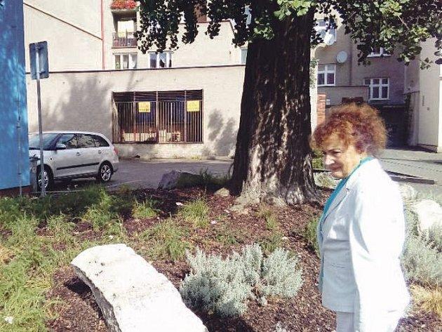 """Naděžda Paprskarzová jako učitelka biologie patřila k hrstce Krnovanů, kteří už před padesáti lety znali skutečnou hodnotu Ginkgo biloby. V šedesátých letech zastavila dělníky s pilou, kteří přišli """"pokácet tu starou hrušku""""."""