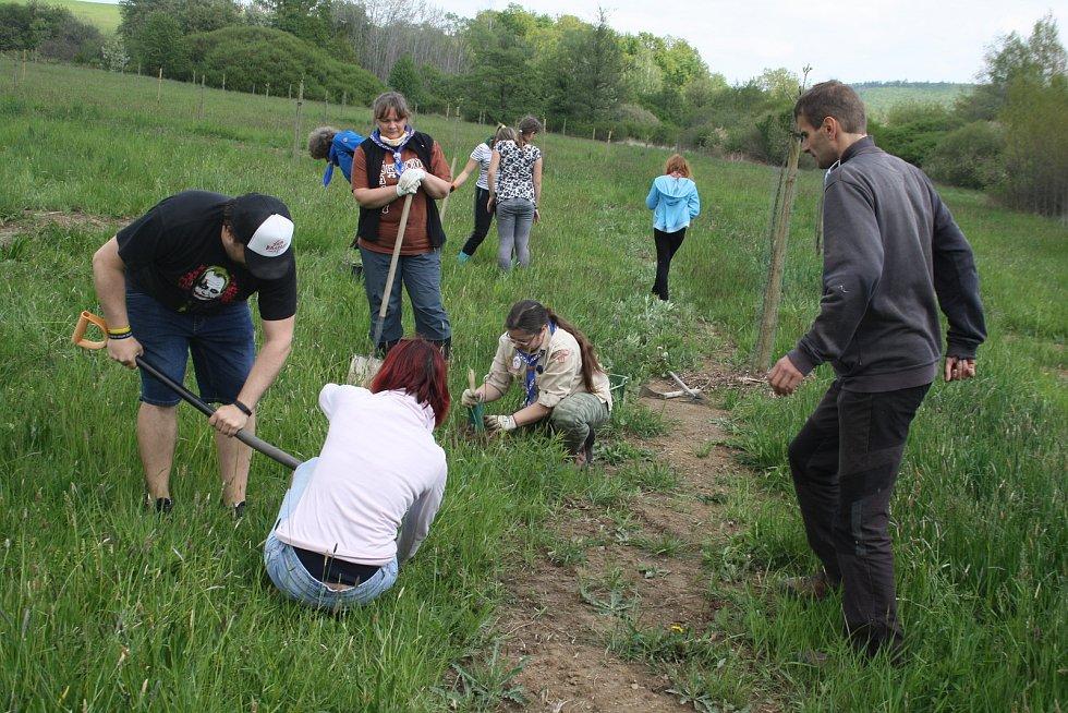 Skauti pomáhají v genofondovém sadu u Krnova likvidovat invazivní druhy rostlin.  Nyní vyrazili vykopat vlčí bob i s kořeny.