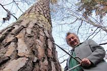 Heřman Menzel v osmdesátých letech upozornil vědecké pracoviště v Plzni na specifické vlastnosti borovice, která na Krnovsku rostla už před tisíci lety. Nejcennější porosty borovice cvilínské se podařilo zachránit na poslední chvíli.