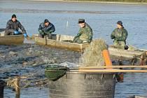 Petrův rybník v Krnově, vodní chlouba rozkládající se ploše šestatřiceti hektarů, se dočkal výlovu.