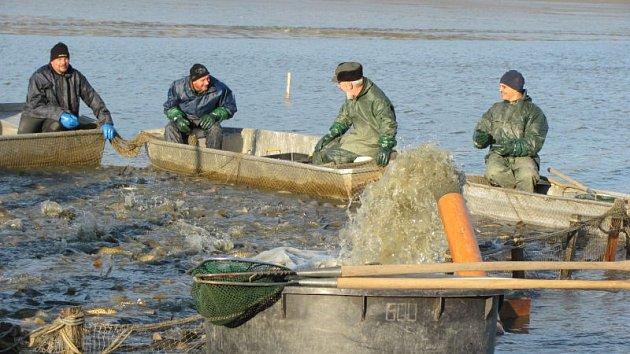 Výlovy rybníků v Moravskoslezském kraji