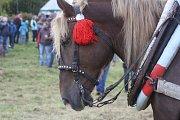 Svod tažných koní v Holčovicích Spáleném letos představil 14 chladnokrevných krasavců.