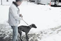 Pes byl odchycen v sobotu, ale musel čekat až do úterka, než si ho převzal provozovatel útulku Tomáš Schulz a převezl ho do Slezských Pavlovic.
