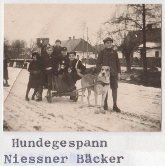 Třetí případ psího potahu byl zaznamenán v Lichnově. Svého psa tam za války zapřahal do vozíku pekař Niessner. Foto: archiv Jana Gemely