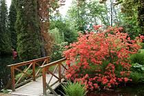 CHÁŘOVSKÝ PARK se v těchto dnech proměnil v romantickou rajskou zahradu plnou kvetoucích rododendronů a azalek, které hýří všemi barvami. Taková krása je zde k vidění jen pár týdnů v roce.