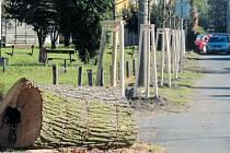 Obnova lipové aleje na ulici Stará Ježnická začala první etapou. Nové stromy jsou vysazeny v úseku od ulice Albrechtické po křižovatku s ulicí Partyzánů.