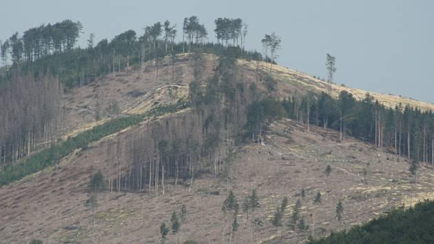 Kůrovcovou kalamitu čekají lesníci ještě horší než loni. Pozitivním signálem je aspoň zimní nadílka sněhu a deště, která doplnila v lesní půdě deficit vláhy.