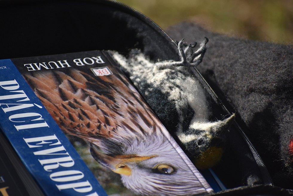 Vítání ptačího zpěvu v Karlově Studánce se zoologem Petrem Šajem přilákalo fanoušky jesenické přírody.
