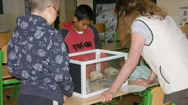 O zvířátka se děti z Břidličné starají i během letních prázdnin.