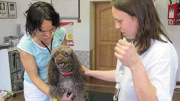 Veterina je povolání na celý život. Ke zvířatům musí mít lékař opravdu blízko, aby jim rozuměl i beze slov.
