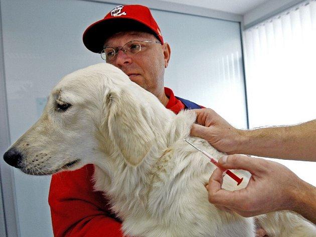 Čipování psa se provádí ve veterinární ordinaci. Čip se zavede psovi pod kůži pomocí duté jehly.