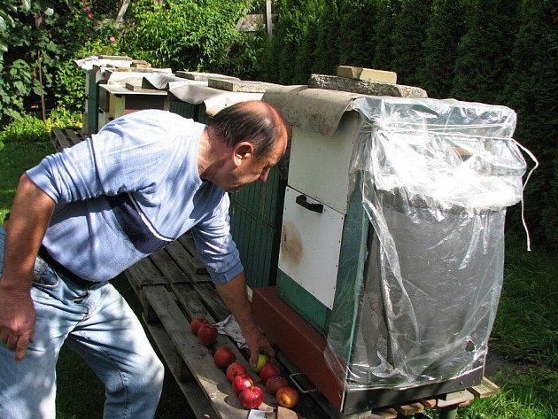 Štefan Minárik kontroluje, kolik cukru stačily od rána spotřebovat včelky ze včelstev, která chová na zahradě ve Vrbně pod Pradědem.