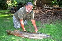 Pavel Švaniga z Břidličné vylovil o víkendu z nádrže Slezská Harta rekordní štiku, která vážila 14 kilogramů a měřila 120 centimetrů. Je mu 73 let.  Na kapitální štiku čekal celý život.