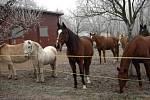 Stáj Láryšov Jany Blažejové nabízí výuku a rekreační ježdění na koních. Obdivovat přírodou ze sedla lze v každém ročním období.