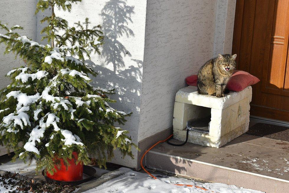 Kočka Angína ze Cvilína si mrazy užívá. Má teplý kožich, polystyrenovou boudičku a v ní vyhřívací elektrickou dečku. Leden 2021.