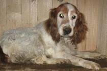 Psí útulek ve Slezských Pavlovicích představuje dalšího psího čekatele na adopci u hodných lidí.