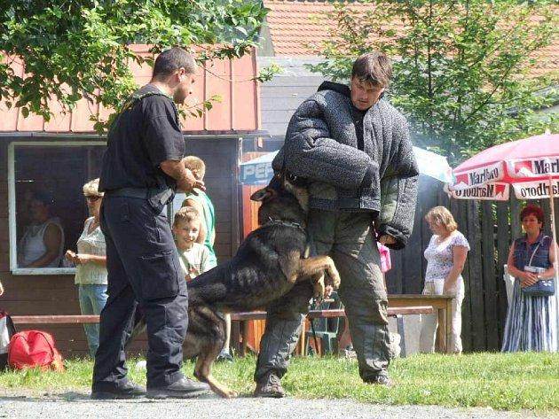 Bruntálští policisté se mohou pyšnit perfektním výcvikem psů.