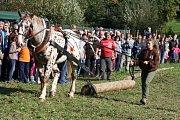 Ctitele koňské krásy čekala  ve Městě Albrechticích podívaná.