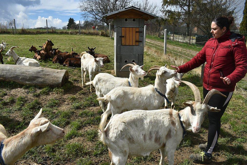 Kozí farma Úvalno je známá pod názvem Šťastné kozy. Chová je totiž rodina Kristýny Šťastné. Každý se může přesvědčit, že zvířata na farmě jsou opravdu šťastná.