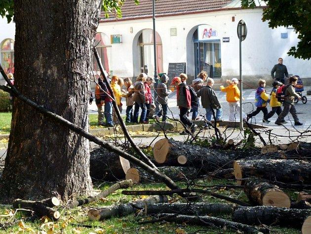 Javor klen před krnovským gymnáziem rostl přes osmdesát let. Dnes už tam není, včera ho skáceli dřevorubci.