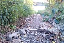 Potok Mohla se před pár dny úplně ztratil a zůstalo po něm jen vyschlé koryto . Deště zřejmě přišly v poslední chvíli, aby na Krnovsku zažehnaly nebezpečné sucho.
