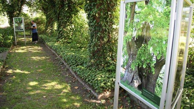 Výstava Nejmohutnější památné stromy ČR byla v Krnově instalována přímo do zahrady mezi stromy. Ukazuje staleté velikány na fotografiích Pavla Hössla a na kresbách zesnulého malíře Jaroslava Turka.