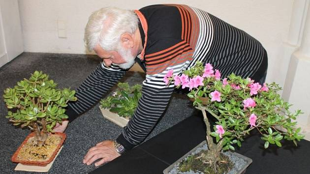 Pavel Hejsek při aranžmá letošní výstavy Klubu skalničkářů Campanula Bruntál v aule bruntálské obchodní akademie na náměstí Jana Žižky.