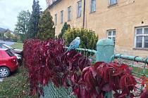 Obyvatelé Hošťálkov už asi týden pozorují andulku. Podaří se ji odchytit, než přijde mráz?