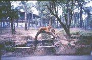 Krnovský technik Jaroslav Balcárek navštívil Brazílii v 80. letech jako pracovník Strojosvitu. Využil tehdy příležitosti a splnil si sen: navštívil Instituto Butantan.