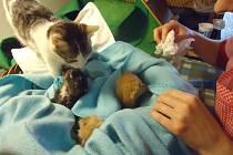 Malí oslavenci z občanského sdružení Kočky Bruntál. Odměnit je něčím sladkým nebo jiným dárkem můžete kdykoliv a přitom si je můžete pohladit.