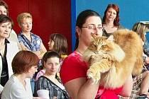 El Ninjo, nádherný kocour norské lesní kočky, jehož třímá chovatelka Markéta Šustrová v Ostravě exceloval a konkurenci doslova rozválcoval.