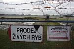 Petrův rybník byl kvůli koiherpeviróze kaprů vypuštěn už v létě. Veterinární opatření pominula a prodej ryb zde byl obnoven. Vánoční kapři ale v letošní nabídce chybí.
