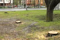 Tři pařezy zbyly po pořezu nebezpečných lip na trávníku před bruntálským Kulturním střediskem v Dukelské ulici.