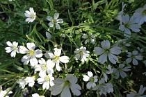 Podívejte se na krásu a rozmanitost rostlin.