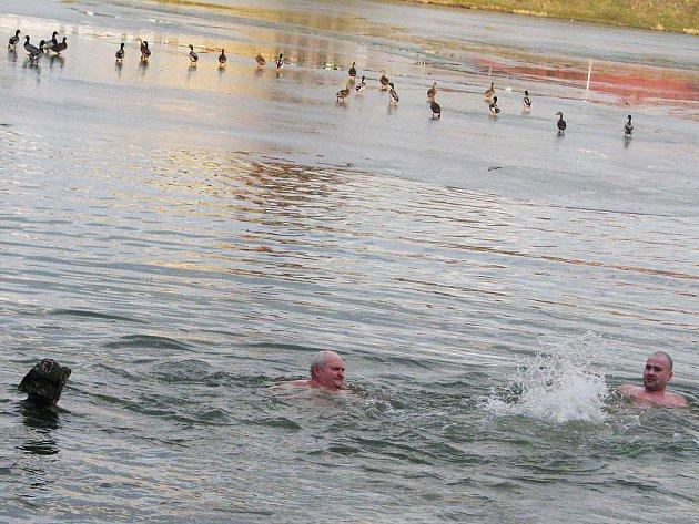 Otužilecké plavání v bruntálském Kobylím rybníce.