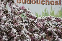 Sníh nečekaně zasypal v úterý 3. května kolem poledne rozkvetlé stromy, zahrady a trávníky plné pampelišek.