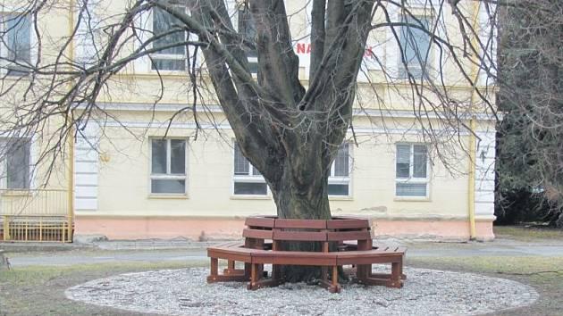 Lavičku kolem stromu vyrobila krnovská stolařská firma Nikoly Papadopulose. Letos je v městském rozpočtu na úpravu okolí kostela vyčleněno 500 tisíc korun.