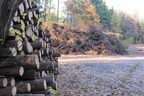 Kůrovec si v suchém a teplém počasí libuje. Lesníci nestaří likvidovat smrky zdecimované suchem, lýkožroutem a václavkami.