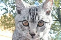 Štefanek je kotě, které hledá rodina z Chářovské ulice v Krnově.