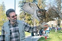 Oblíbenou atrakcí bylo stanoviště Lesů České republiky, kde pracovníci podniku vykládali všem posluchačům o životě jednotlivých dravých ptáků u nás. Děti si mohly živé dravce také pohladit. Na obrázku dává ornitolog povel výru velkému, aby zamával.