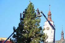 Stromy v Krnově už jsou vánočně nazdobené, ale rozsvítí se až v neděli 2. prosince u příležitosti zahájení adventních trhů.