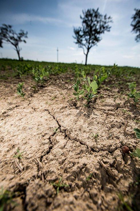 Vody chybí opravdu spousta. Aby jí bylo dost, muselo by jí napršet tolik, kolik jí v průměru z mraků spadne za celý jeden rok.