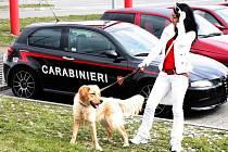 Grande Pregio Bruntál. Takový název nesl mezinárodní sraz příznivců vozidel Alfa Romeo, který se už popáté v řadě prohnal Jeseníky.
